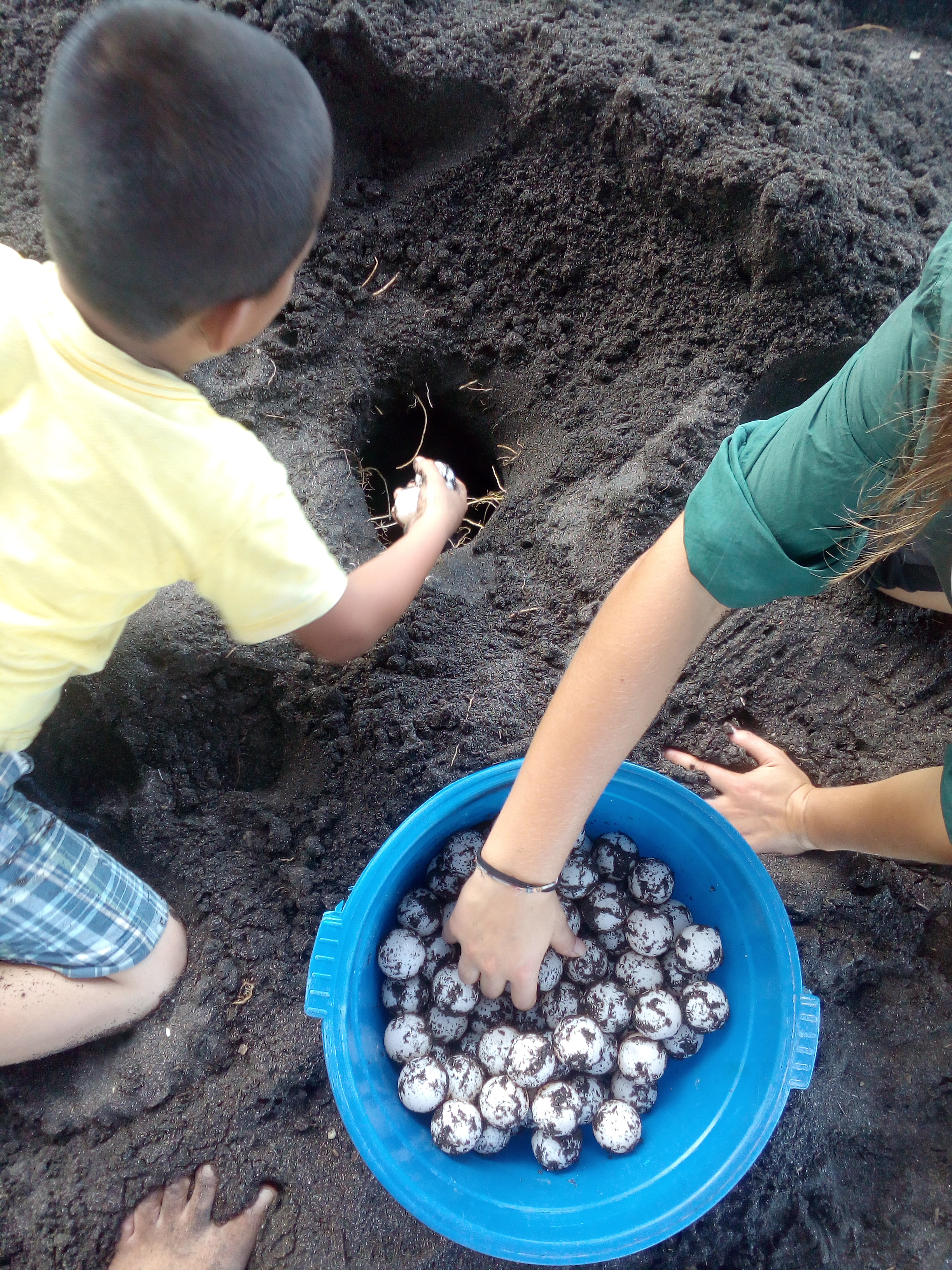 quiero ser voluntario en Guatemala con tortugas