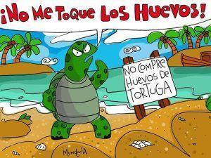 Organizo tu viaje de voluntariado en Costa Rica tortugas