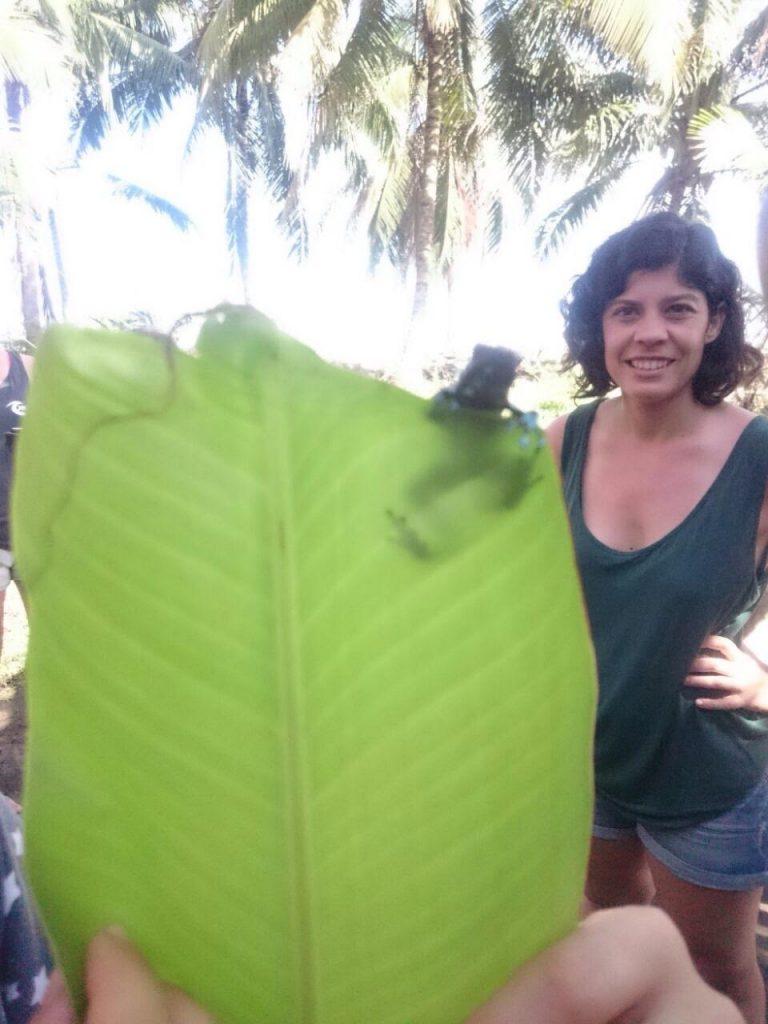 Voluntariado en Costa Rica cuidado de animales y medio ambiente