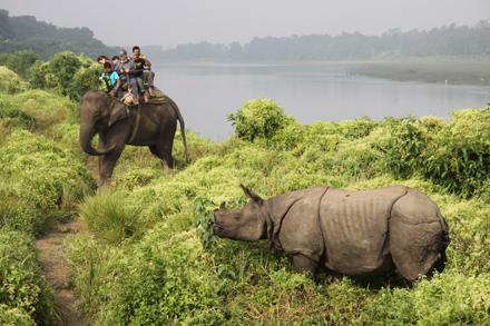 Experiencia increíble, hacer este safari por la selva montados en la espalda de un elefante, cruzando ríos y parajes naturales, se ven los tigres de Bengala, rinoceronte Indio, monos, ciervos, elefante, cocodrilos, oso perezoso, más de 450 especies de aves.