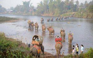 Sobre los Elefantes en Laos, voluntariado.