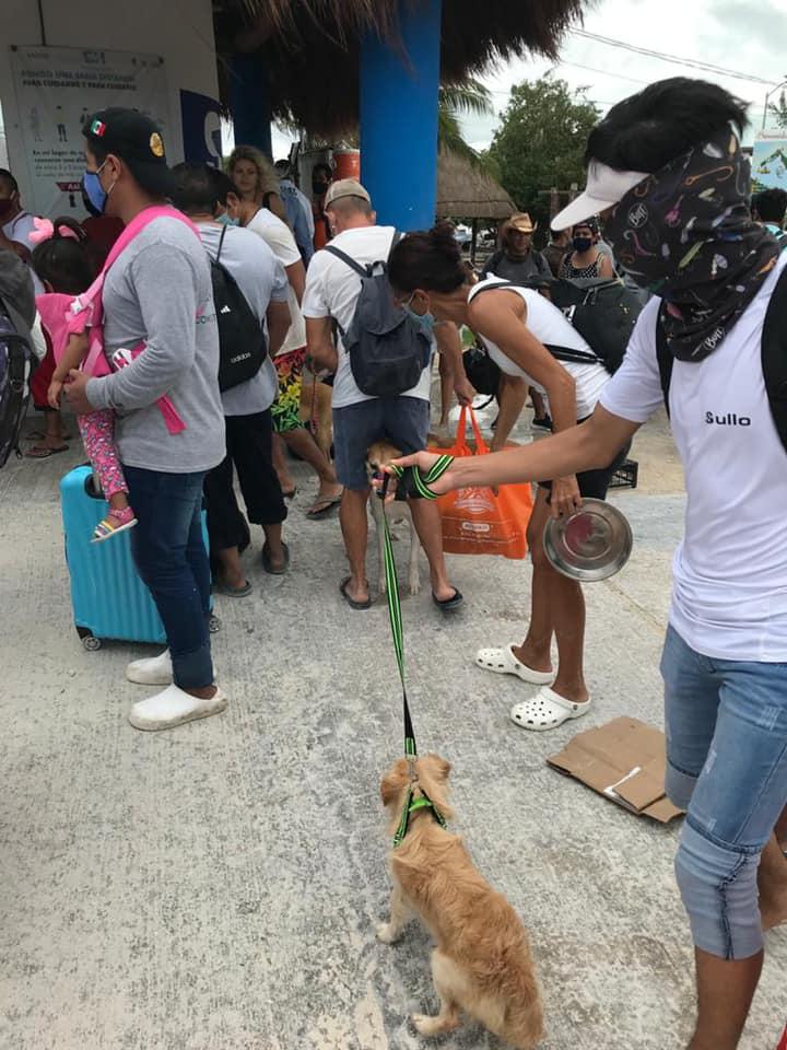 Voluntariado animales México Holbox